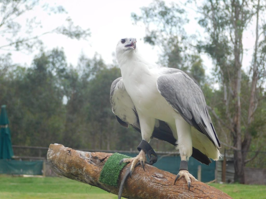 animals at the lone pine koala sanctuary in brisbane